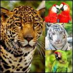 collage-animals-2