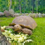 tortuga-habitat